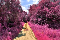 Stunning infrared view on purple fantasy landscapes with some ashpalt roads royalty free stock photography