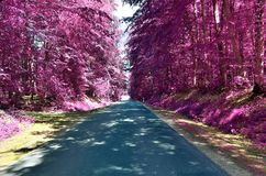 Stunning infrared view on purple fantasy landscapes with some ashpalt roads royalty free stock photos