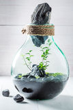 Stunning jar with live forest as new life concept Stock Photo