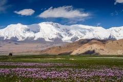 Stunning Karakorum landscape Royalty Free Stock Image