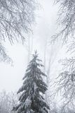 Stunning landscape, frosted trees Stock Photography