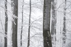 Stunning landscape, frosted trees branched in a forest Royalty Free Stock Photo
