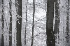 Stunning landscape, frosted trees branched in a forest Stock Photos