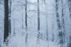 Stunning landscape, frosted trees branched in a forest Stock Images