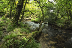 Stunning landscape iamge of river flowing through lush green for Stock Images