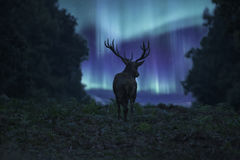Stunning landscape image of red deer stag silhouetted Stock Images
