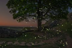 Beautiful landscape image of sunset with fireflies flying around. Stunning landscape image of sunset with fireflies flying around tree and glowing in dusk light Royalty Free Stock Image