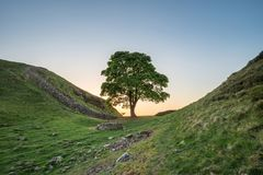 Beautiful landscape image of Sycamore Gap at Hadrian`s Wall in N. Stunning landscape image of Sycamore Gap at Hadrian`s Wall in Northumberland at sunset with Stock Image