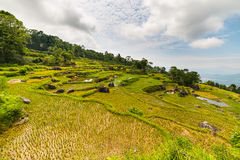 Stunning landscape of rice fields on the mountains of Batutumonga, Tana Toraja, South Sulawesi, Indonesia. Panoramic view from abo Stock Photography