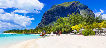 Stunning Le Morne in Mauritius. Horse riding on the beach Royalty Free Stock Photography