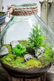 Stunning live plants in a jar as new life concept Stock Photos