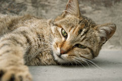 Stunning look of a cat. Cat, after having some deep sleep, so Good Morning Stock Photography
