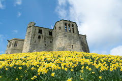 Stunning medieval castle with bright yellow daffodils in front. A lovely medieval castle in spring with daffodils in full bloom Royalty Free Stock Image