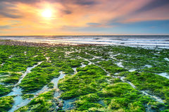 Stunning mossy beach and beautiful sunset near Etretat,Normandy,France stock images