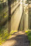 Stunning Natural Rays Of Light Entering Forest Through Trees On A Fresh Autumn Morning. Stock Photography