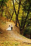 Stunning newlyweds walk along the pass in park covered with gold Royalty Free Stock Photos