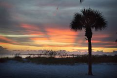 A stunning orange sky at sunset with a dark palm tree on the beach in Ft.Myers Beach, Florida. Stock Images