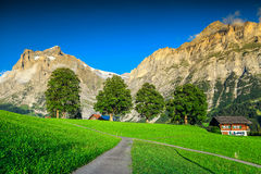 Stunning orderly green field with high snowy mountains, Grindelwald, Switzerland Royalty Free Stock Photography