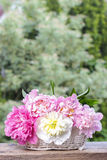 Stunning peonies in white wicker basket Royalty Free Stock Photography