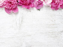 Stunning peonies on wooden background Royalty Free Stock Photos