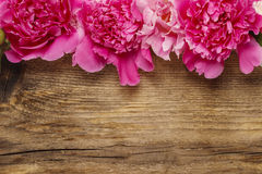 Stunning peonies on wooden background Stock Photo