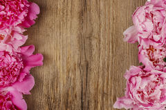 Stunning peonies on wooden background Royalty Free Stock Photo