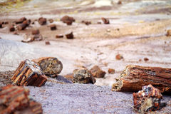 Stunning petrified wood in the Petrified Forest National Park, Arizona Royalty Free Stock Photography
