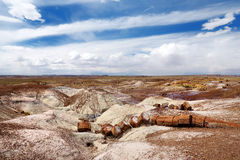 Stunning petrified wood in the Petrified Forest National Park, Arizona Royalty Free Stock Photo
