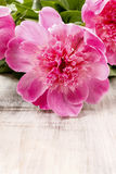 Stunning pink peonies on rustic wood Stock Photography
