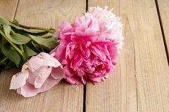 Stunning pink peonies on rustic wooden background Stock Images