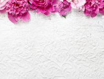 Stunning pink peonies on white paper background Stock Images