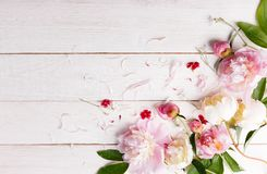 Stunning pink peonies on white rustic wooden background. Copy space