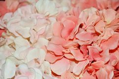 Pink Hydrangea Floral Print royalty free stock image