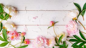 Stunning pink peonies on white rustic wooden background. Copy space. Stunning pink and white peonies on rustic wooden background. Copy space. Birthday, Mother& stock photo