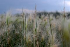 Miniature sun on the grass. royalty free stock photos
