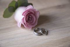 Stunning platinum wedding rings on a pale ash wood background with pink rose buttonhole. Landscape Photograph of Stunning platinum wedding rings on a pale ash royalty free stock images