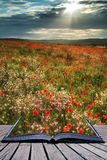 Stunning poppy field landscape in Summer sunset light conceptual Stock Photography