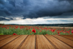 Stunning poppy field landscape in Summer sunset light with woode Stock Photography