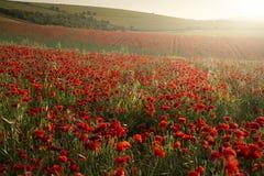 Stunning poppy field landscape under Summer sunset sky royalty free stock photography