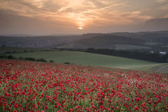 Stunning poppy field landscape under Summer sunset sky Royalty Free Stock Images