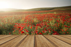 Stunning poppy field landscape under Summer sunset sky with wood Royalty Free Stock Image