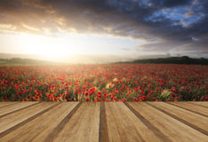 Stunning poppy field landscape under Summer sunset sky with wood stock photography