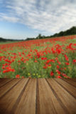 Stunning poppy field landscape under Summer sunset sky with wood royalty free stock photo