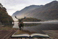 Stunning powerful red deer stag looks out across lake towards mo Stock Photography