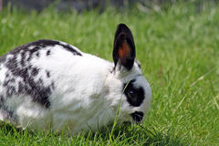 Stunning rabbit Royalty Free Stock Photo
