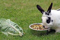 Stunning rabbit Stock Images