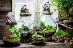 Stunning rain forest in a jar as new life concept Stock Image