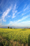 Stunning field and blue s. Ky with white clouds royalty free stock image