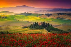 Stunning red poppies blossom on meadows in Tuscany, Pienza, Italy