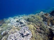 Stunning reef wall at Menjangan Island Royalty Free Stock Photo